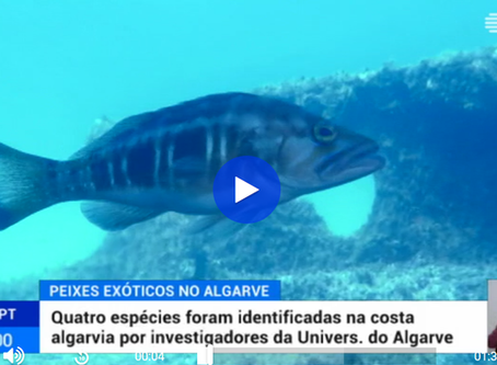 Reportagem na RTP1 sobre espécies subtropicais no Algarve