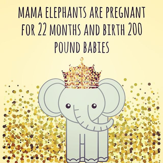 Pop of Knowledge: Elephant Mamas!