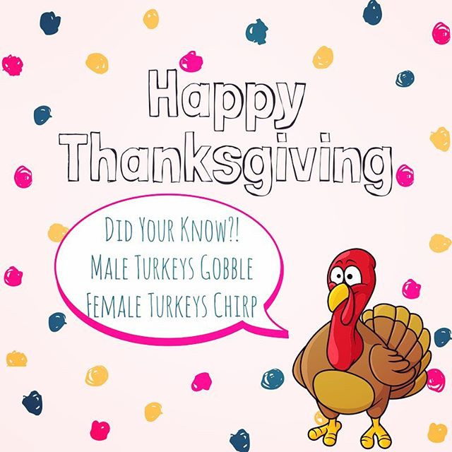 Pop of Knowledge: Happy Thanksgiving!
