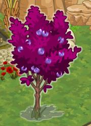 Plum+Tree+Relic