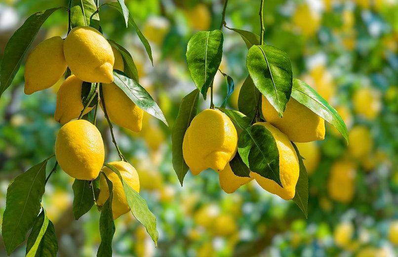 history-of-lemons.jpg