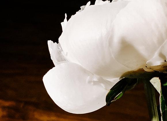 White Petals V (series)