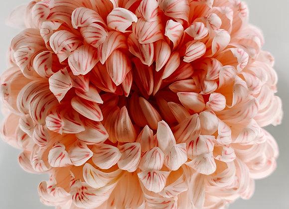 A Flower Called Mum