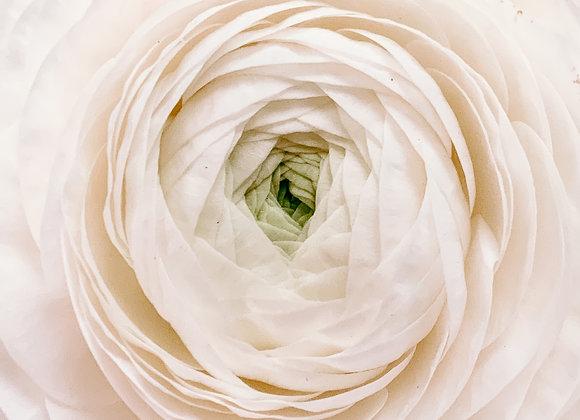 Single White Flower II (series)