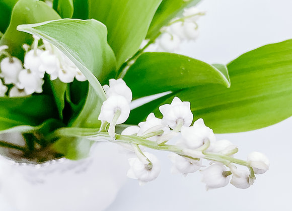 Lily of the Valley III (series)
