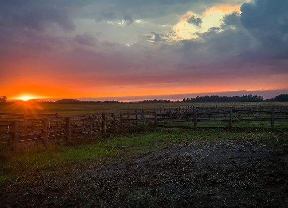 Late Summer Sunset II (series)