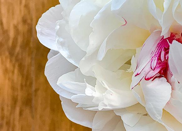 Perfect White Petals
