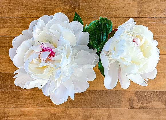 Two White Blossoms