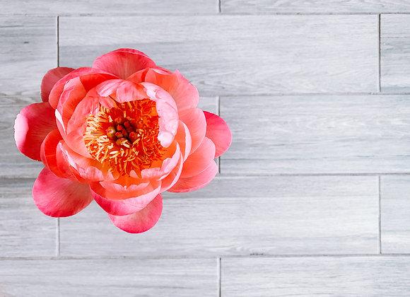 Full Bloom (series)