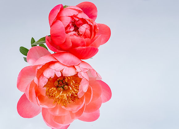 If Love Was a Flower III (series)