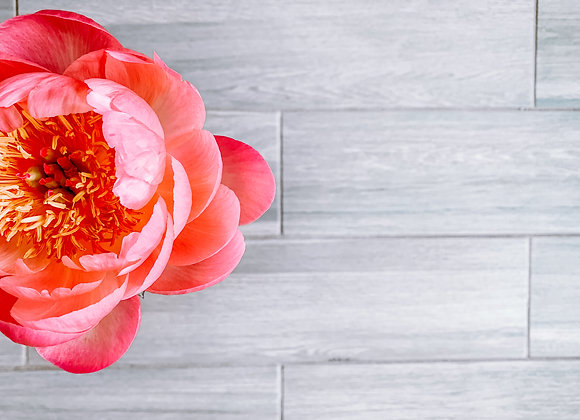 Full Bloom II (series)