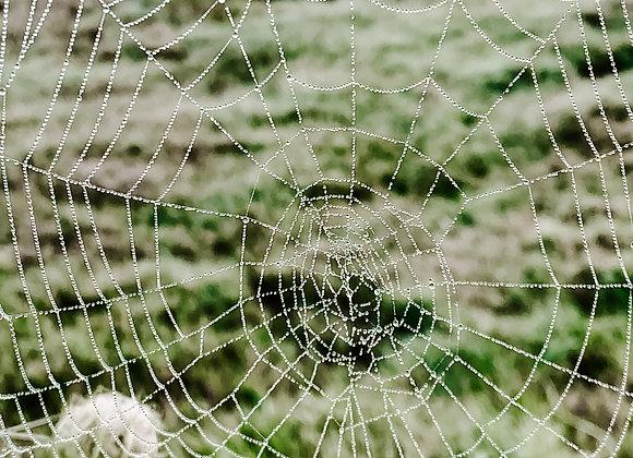 Beauty in the Web II (series)