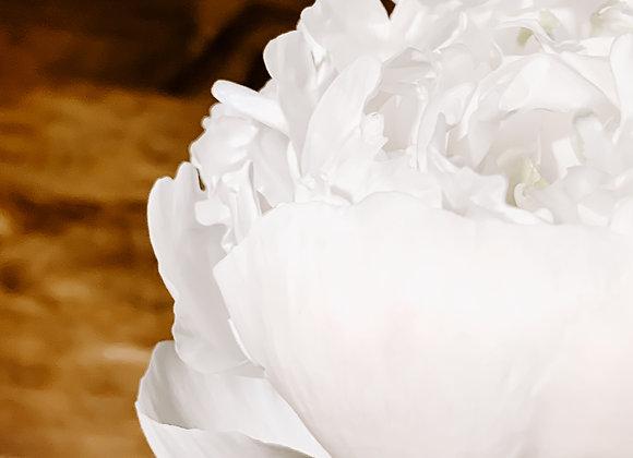 White Petals VI (series)