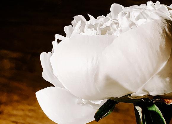 White Petals IV (series)