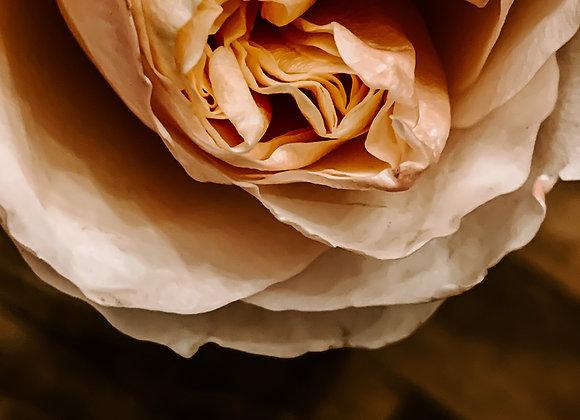 Little Rose III (series)