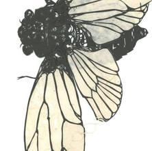 蝉のおもちゃ