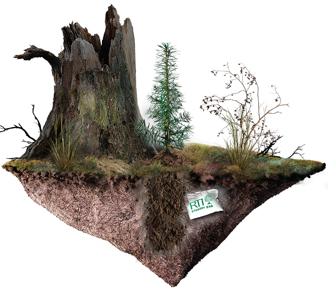 FOREST PLANTING.png