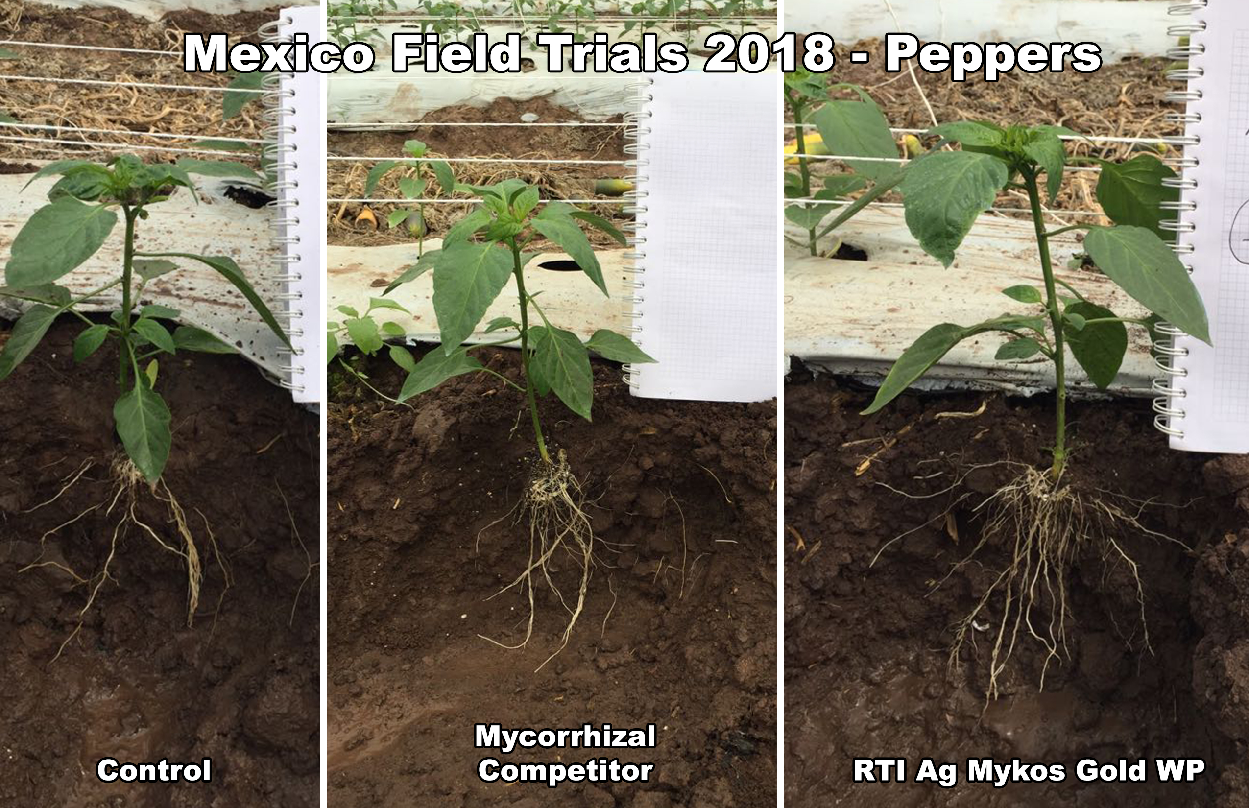 rti ag mexico pepper trials 2018