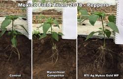 rti ag mexico pepper trials 2018