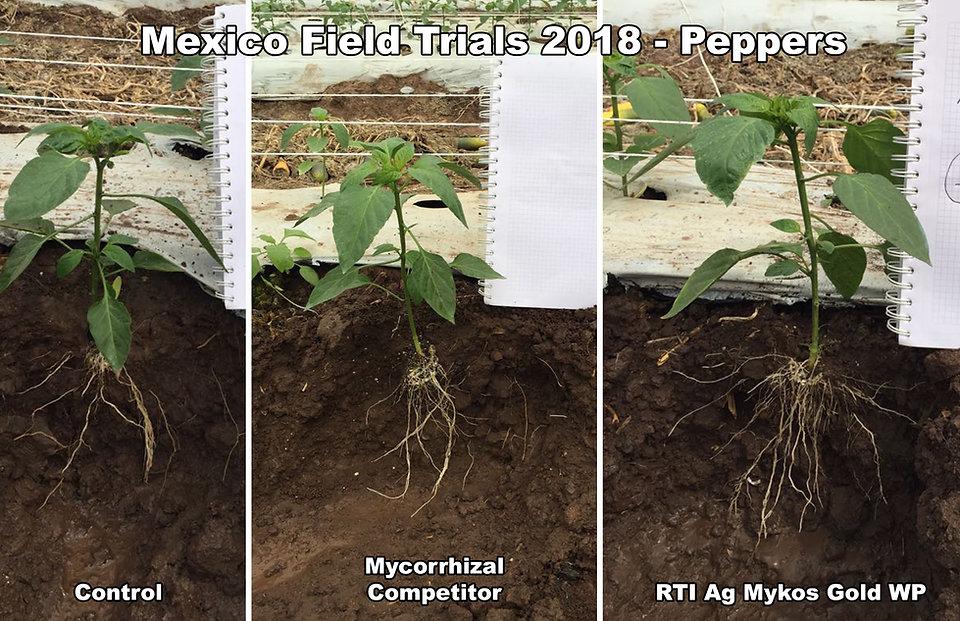 rti ag mexico pepper trials 2018.jpg