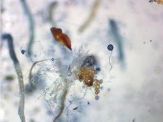 Mycorrhizal Fungi: This Tiny Microbe Is the 800 lb. Gorilla