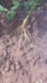 Screen Shot 2019-06-17 at 10.57.59 AM.pn