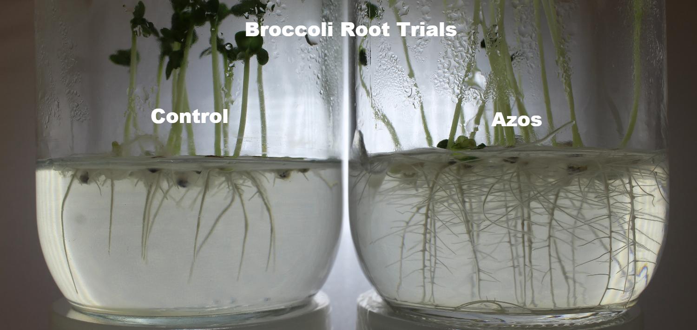 Broccoli Germination Trial