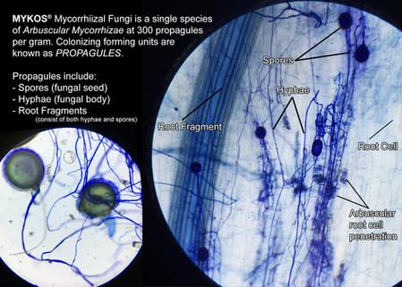 Mycorrhizal Propagules
