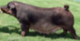 Bull Rush 120-10.jpg