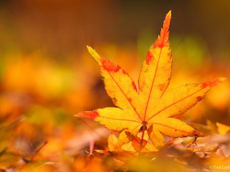Happy Meteorological Autumn!