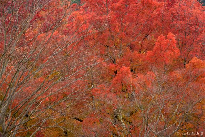 Autumn on Fire