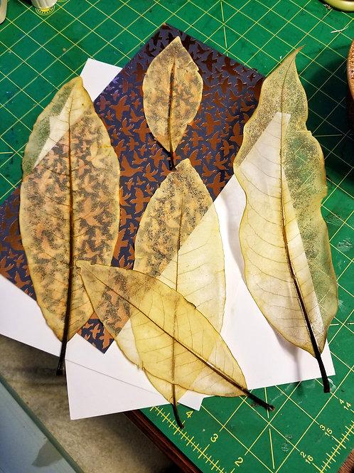 Med Skeleton Magnolia Leaves