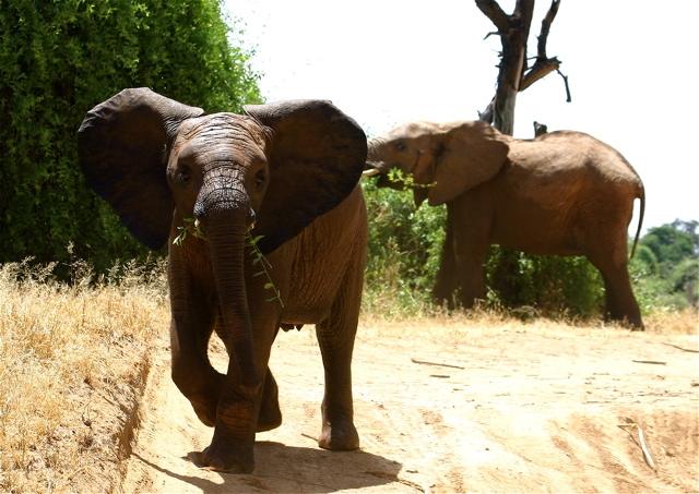 kid elephant