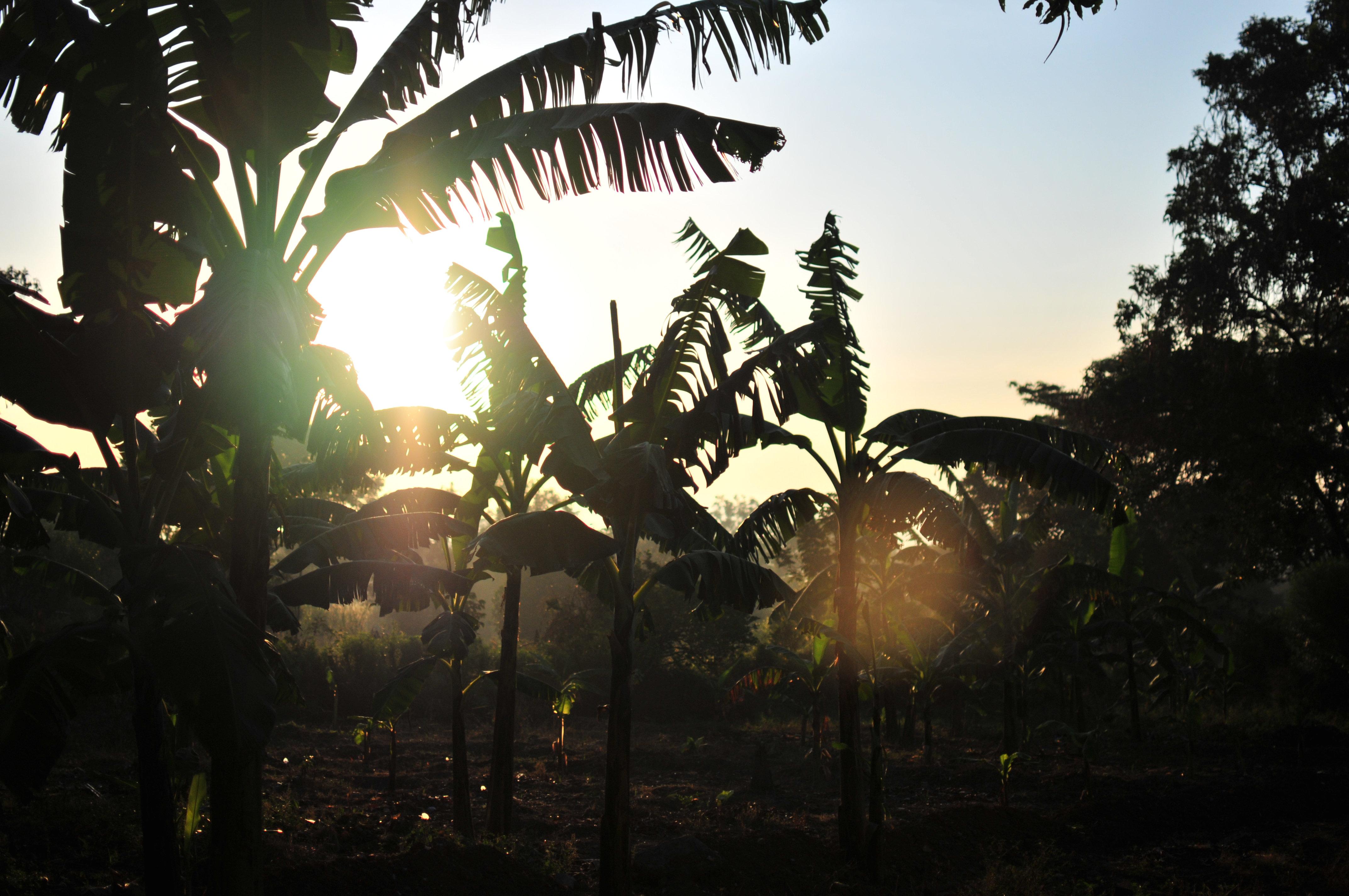 Sonnenuntergang Uganda