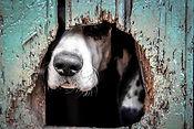 animals-2607753__480.jpg