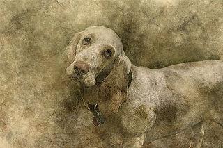 dog-2422562__340.jpg