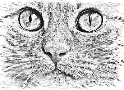drawing-1533191_960_720.jpg