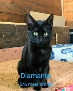 Diamante ängstlich