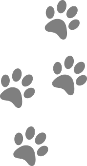 footprints-309158__340.png