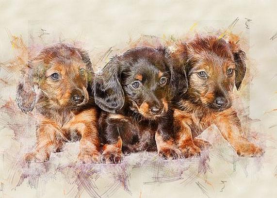 dachshund-3726491__340.jpg