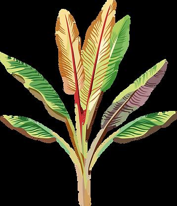 Banana plante