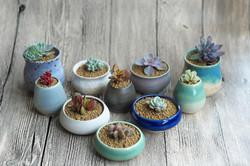 Miniature Succulent