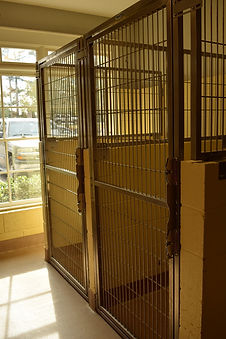 kennel pic5.jpg