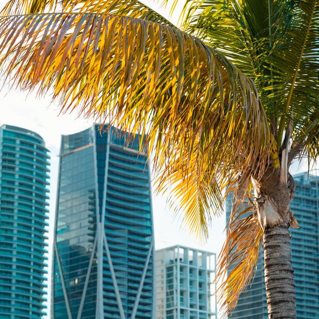 Bayside Palm Trees