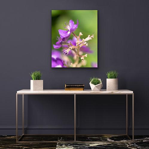 Macro Purple Flowers