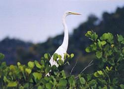 The egret.jpg