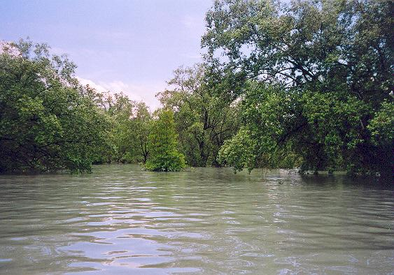 High tide at the mangrove.jpg
