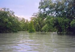 High tide at the mangrove.jpg