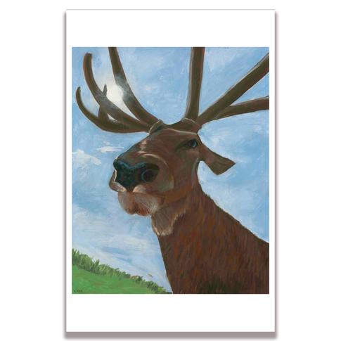 Elk Poster Print