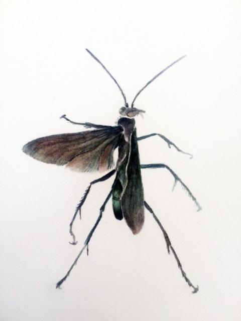 Pompiloidea